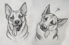 German Shepard sketches by Reenama.deviantart.com on @DeviantArt