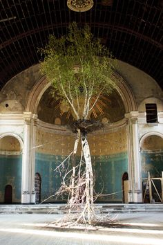 Shinji Turner-Yamamato, Global Tree Project, Hanging Garden | Holy Cross Church, Mt. Adams, Ohio Dead and live white birches, soil, water, metal support/support for broken trunk, water irrigation system
