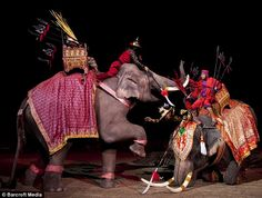 The re-enactment is said to be helping to re-establish the mahout's position in Thai society Exotic Animals, Exotic Pets, War Elephant, Siam, Elephant Design, Indian Art, Tibet, Warfare, Cambodia