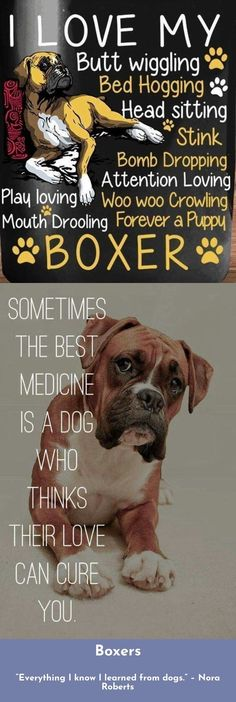 Discover more about Boxers Just click on the link for more. #boxers Boxer Quotes, Stink Bomb, Boxer Puppies, How Big Is Baby, Love Can, Boxers, The Cure, Babies, Link