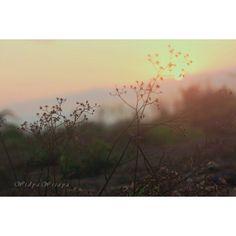 Aku jatuh hati pada setiap suasana seperti ini. Good night igers. See you tomorrow morning. #goldenlight#sunset#landscape_photography#viewindonesia#igersindo#igphoto#nakedplanet#explorenature#seetheworld#wanderlust by widya.n.wijaya