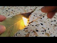 Faites brûler une feuille de laurier dans votre maison: La raison vous fera le plus grand bien! - Trucs et Bricolages