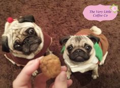 Basil and Betty, Not only VERY focussed on the Cupcake testing but also ready for Christmas! Love it!!