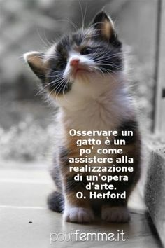 Foto animali con scritte | PourFemme Baby Kittens, Cute Cats And Kittens, I Love Cats, Beautiful Cats, Animals Beautiful, Cosby Kids, Animals And Pets, Cute Animals, Man And Dog
