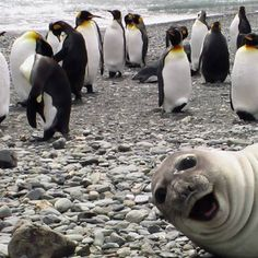 17 Animals Photobomb Wedding Pictures For Hilarious Results