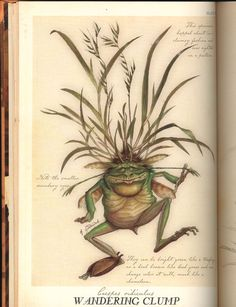 Stray Sod - Spiderwick Chronicles Wiki Forest Creatures, Mythical Creatures Art, Mythological Creatures, Magical Creatures, Fantasy Creatures, Fantasy World, Fantasy Art, Spiderwick, Field Guide