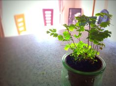 adiantum of a dining room
