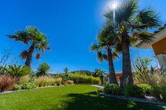 Sublimer des palmiers majestueux dans un cadre verdoyant ! #paysagiste #architectepaysagiste #palmier #jardin #exterieur #piscine #gazon #creationexterieure #sud Palmiers, Golf Courses, Gardens, Lawn, Landscape Planner