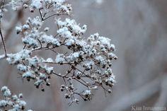 Kiia Innanmaa: Missä se talvi viipyy ?