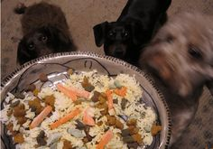 Bland Diet Recipes for Dogs