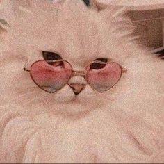 H cats pets cute – Wallpaper Cat Aesthetic, Aesthetic Collage, Aesthetic Vintage, Angel Aesthetic, Aesthetic Clothes, Aesthetic Iphone Wallpaper, Aesthetic Wallpapers, Photo Wall Collage, Aesthetic Pictures