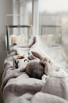 Don't you just want to cuddle this pet rabbit? Don't you just want to cuddle this pet rabbit? Cute Baby Bunnies, Cute Babies, Bunny Bunny, Easter Bunny, Animals And Pets, Funny Animals, Pet Rabbit, Cute Little Animals, Adorable Animals