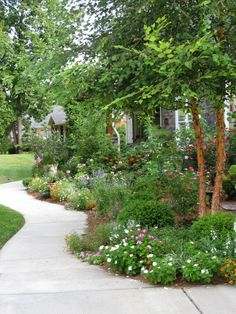 Garden path with River Birch tree (Diy Garden Paths) Garden Trees, Lawn And Garden, Garden Paths, Pergola Garden, Terrace Garden, Outdoor Landscaping, Front Yard Landscaping, Outdoor Gardens, Landscaping Edging