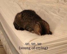 Cute Funny Animals, Cute Cats, Funny Cats, Funny Reaction Pictures, Funny Animal Pictures, Cute Cat Memes, Funny Quotes, Funny Memes, Current Mood Meme