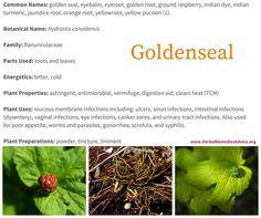 Benefits of Goldenseal