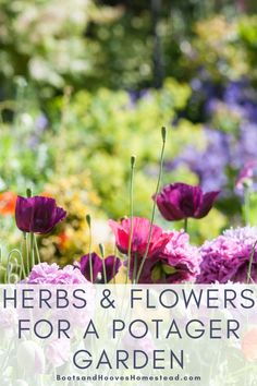 Herbs and Flowers for a Potager Garden design. What are some of the herbs to add to a kitchen garden. #gardening #herbgarden #potager #garden Diy Herb Garden, Potager Garden, Indoor Gardening Supplies, Container Gardening, Kitchen Herbs, Vegan Kitchen, Kitchen Recipes, Diy Garden Projects, Garden Ideas