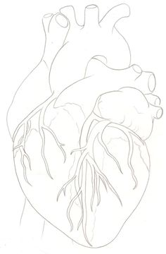 Human Heart Tattoo by ~Metacharis on deviantART