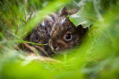 "cute-overload: "" Hiding spot. http://cute-overload.tumblr.com """
