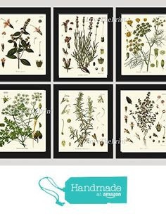 Herbs and Spices Botanical Set of 6 Prints Antique Beautiful Peppermint Lavender Fennel Parsley Rosemary Thyme Home Room Decor Wall Art Unframed KOH from LoveThePrint https://www.amazon.com/dp/B01LBKNVLW/ref=hnd_sw_r_pi_dp_H-85xb5ZBQND3 #handmadeatamazon