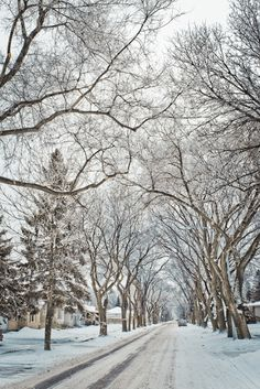 Winter Road, Winnipeg, Canada ! Oh so remember these winter scenes like it was yeasterday. So,pretty!  photo by Carla Dyck