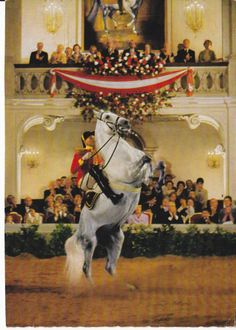 The Spanish Riding School has always been an important part of Vienna and as such has appeared in paintings, books, postcards and in this case, Christmas Cards. Majestic Horse, Beautiful Horses, Animals Beautiful, Spanish Riding School Vienna, Lippizaner, Lipizzan, Munich, Andalusian Horse, White Horses
