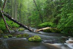 Nature photography - Wikipedia, the free encyclopedia