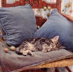 Tabby kitten asleep on blue cushions