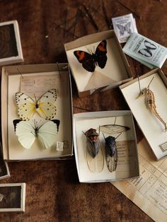 Lepidopterology, coleopterology, and...  (For the Victorian cabinet of curiosities.)