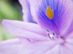 Water hyacinth - http://dkenvironmental.com/blog/water-hyacinth-7/