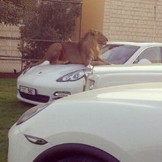 Car park attendants you don't want to mess with. | 35 Things You See Every Day In Dubai