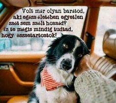 Mazsi♡ Animals And Pets, Cute Animals, Dog Quotes Love, Commercial Photography, Be Yourself Quotes, I Love Dogs, Quotations, Verses, Dog Cat