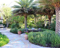 sylvester palm tree - Google Search