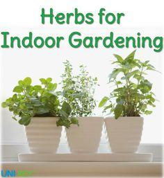 Herbs for Indoor Gardening #Tips