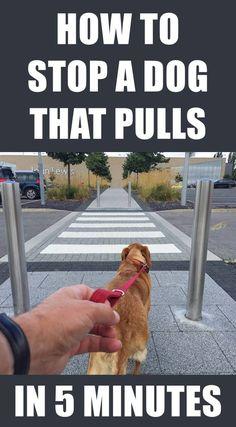 dog learning,dog tips,dog care,teach your dog,dog training Dog Training Techniques, Dog Training Tips, Agility Training, Training Classes, Brain Training, Dog Agility, Training Equipment, Training Pads, Toilet Training