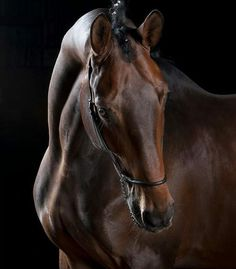That is one beautiful horse - Pferd Cute Horses, Pretty Horses, Horse Love, Horse Photos, Horse Pictures, Most Beautiful Horses, Animals Beautiful, Equine Photography, Animal Photography