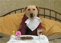Il pasto più importante della giornata per un cane
