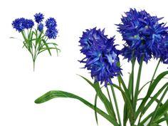 Agapanthus Bush Violet sff