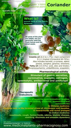 Coriander benefits. Infographic. Properties of the plant. Summary of the general characteristics of the Coriander plant. Medicinal properties, benefits and uses more common of Coriander. Pharmacognosy - Medicinal plants - Herbs. http://www.medicinalplants-pharmacognosy.com/herbs-medicinal-plants/coriander/benefits-infographic/