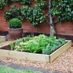 I love the look of this garden... Love the trained pear tree, the boxwood pot and the raised garden.