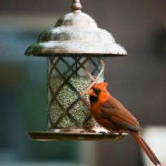 Cleaning and caring for birdfeeders