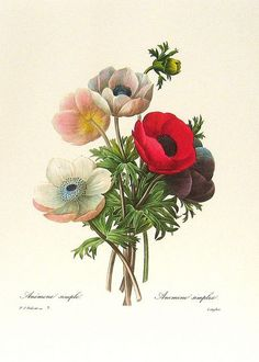 Redoute Art Flowers, Fruits | Flickr - Photo Sharing!