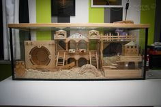 Hamster more than gerbil long term - but short term - what great fun they would have! Hamster Diy Cage, Gerbil Cages, Hamster Habitat, Hamster Life, Bunny Cages, Chinchillas, Hamsters As Pets, Pet Rats, Puppies