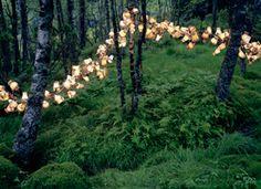 Les installations en pleine nature de Rune Guneriussen on Etsy