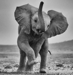 Perhaps the cutest elephant I have ever laid eyes on!!!