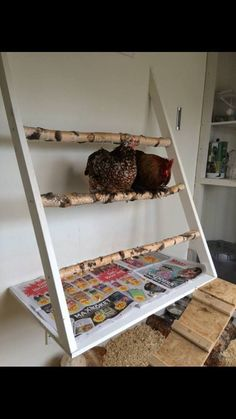 67505564d938ba7a7d811f78a66762db--flocking-chicken-coups.jpg (540×960)