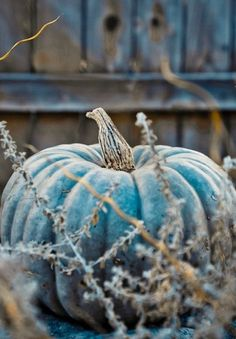 The Blue Moon pumpkin is quite an interesting pumpkin. The outside is blue and the flesh is cantaloupe's orange. Such a beautiful pumpkin, I need to find these this fall! Colour Schemes, Color Combos, Colour Palettes, Favorite Color, My Favorite Things, Fine Art Photo, Thanksgiving Decorations, Fall Decorations, Thanksgiving Table