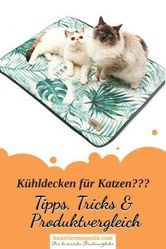 Wie gut sind Kühlmatten für Katzen und welche Matte hält den Tatzen am längsten stand?  Wir haben verschiedene Produkte für euch verglichen.  #haustiermagazin #htm #katze #tatze #kühlmatte #katzeimsommer Chinchilla, Animals Dog, Wild Animals, Rabbits, Cat Behavior, Chinchillas