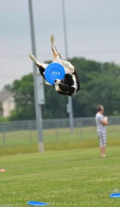 Disc dog, awesome shot!