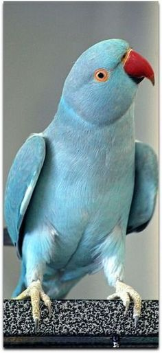Parrot    Found on picmonkey.com   (via Pinterest)