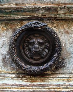 scrisori-de-sertar:    The lion and the ouroboros.  darkhaus:    Door knocker, Isle Saint Louis, Paris
